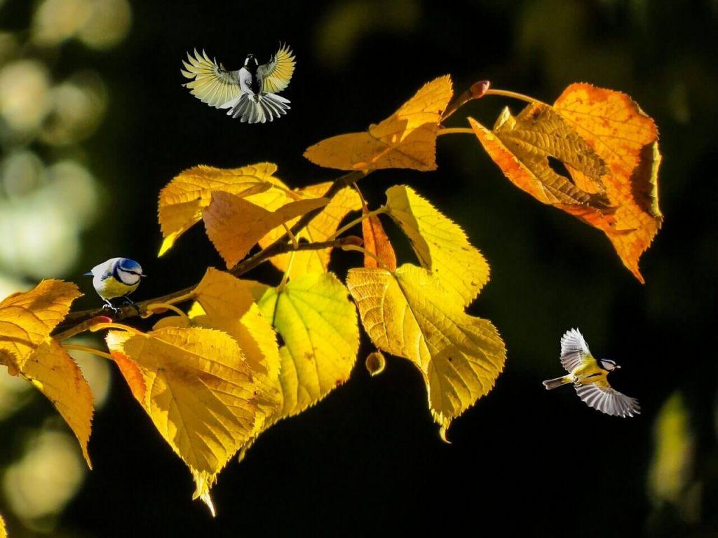 Doğa, Kuş, Sarı Yaprak