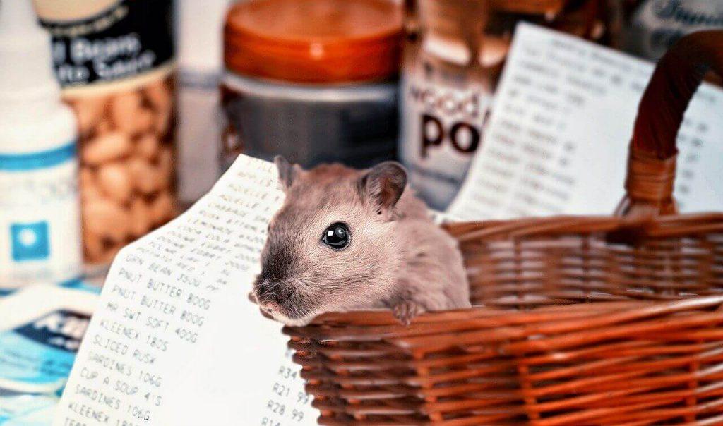 Hamster Virüs